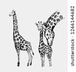 giraffe sketch. hand drawn... | Shutterstock .eps vector #1266144682