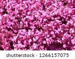 nice flowers in the garden in... | Shutterstock . vector #1266157075
