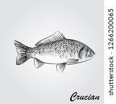 hand drawn crucian sketch... | Shutterstock .eps vector #1266200065