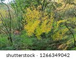 yellow autumn leaves scenery of ... | Shutterstock . vector #1266349042
