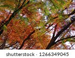 colorful autumn leaves scenery... | Shutterstock . vector #1266349045