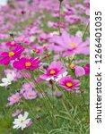 scenery of tsurumiryokuchi park.... | Shutterstock . vector #1266401035