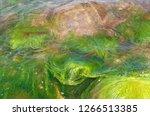 Green Algae Under Water  Algae...