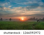 morning sunshine in the rainy... | Shutterstock . vector #1266592972