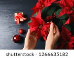 Woman With Poinsettia ...
