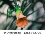 a small orange flower | Shutterstock . vector #1266742708