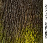 Old Wood Tree Bark Texture Wit...
