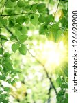 abstract blurred spring green... | Shutterstock . vector #126693908