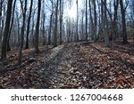 colorful forest  nature... | Shutterstock . vector #1267004668