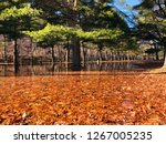 sub freezing lake with colorful ... | Shutterstock . vector #1267005235