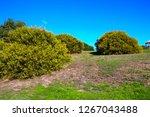 soft  beautiful  fluffy ...   Shutterstock . vector #1267043488