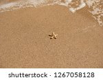 starfish on sea sandy beach at... | Shutterstock . vector #1267058128