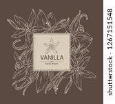 background with vanilla  flower ... | Shutterstock .eps vector #1267151548