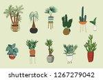 interior home plants hand drawn ... | Shutterstock . vector #1267279042
