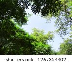 leaves   foliage and green... | Shutterstock . vector #1267354402