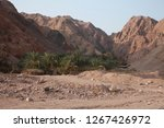 day trip in dahab  egypt | Shutterstock . vector #1267426972