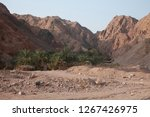 day trip in dahab  egypt | Shutterstock . vector #1267426975