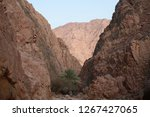 day trip in dahab  egypt | Shutterstock . vector #1267427065