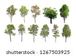 collection of isolated trees on ... | Shutterstock . vector #1267503925