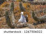 isla dama  chile   04 of... | Shutterstock . vector #1267506022