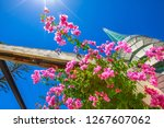 perspective view of blooming... | Shutterstock . vector #1267607062