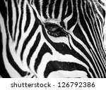 zebra face profile close up as... | Shutterstock . vector #126792386