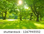 morning garden sunlight | Shutterstock . vector #1267945552