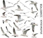 White Birds Set. Isolated On...