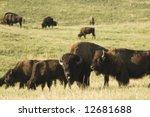 a herd of american buffalo... | Shutterstock . vector #12681688
