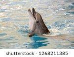 dolphins portreit and swim | Shutterstock . vector #1268211385