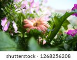 beautiful floral background... | Shutterstock . vector #1268256208