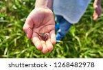 little green frog sitting on a... | Shutterstock . vector #1268482978