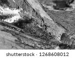 tree log by the beach in the... | Shutterstock . vector #1268608012