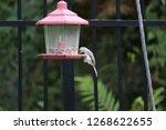 cute chickadee titmouse... | Shutterstock . vector #1268622655