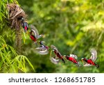 birds in love  black and red... | Shutterstock . vector #1268651785