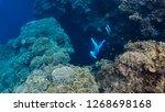 Free Diver Explores An...