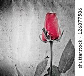 red rose flower on black and... | Shutterstock . vector #126877586
