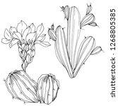 vector cacti floral botanical... | Shutterstock .eps vector #1268805385