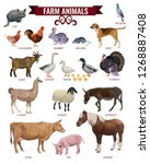set of farm animals. vector... | Shutterstock .eps vector #1268887408
