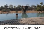 elephant drinking at the pool... | Shutterstock . vector #1268937685