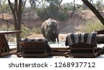 elephant drinking at the pool... | Shutterstock . vector #1268937712