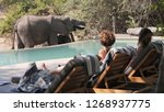 elephant drinking at the pool...   Shutterstock . vector #1268937775