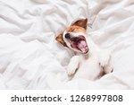 Cute Dog Sleeping And Yawning...