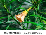 an orange flower | Shutterstock . vector #1269109372