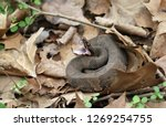 side view of a water moccasin ... | Shutterstock . vector #1269254755