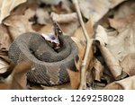 side shot of a cottonmouth... | Shutterstock . vector #1269258028