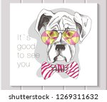 puppy boxer in pink glasses and ... | Shutterstock .eps vector #1269311632