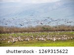flock of  migrating common... | Shutterstock . vector #1269315622