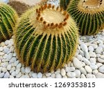 many giant rounded circle... | Shutterstock . vector #1269353815