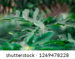 green weed leaves | Shutterstock . vector #1269478228